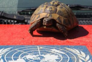 Symbol for the slow development of Kosovo under the UN administration